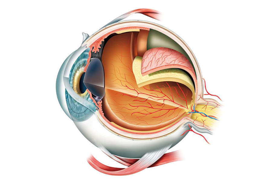 Eye Anatomy | Desert Vision Optometry, Palm Springs, CA